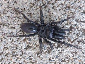 Spinne unbekannt.jpg