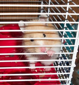 hamster-13755.jpg