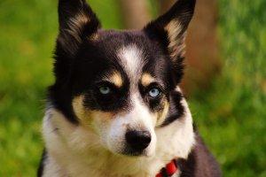 dog-2440586_1920.jpg
