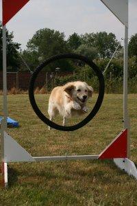 dog-school-3710676.jpg
