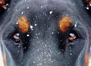 eyes-and-the-snow-flakes-1133707.jpg