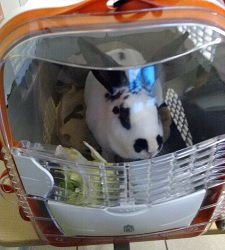Eine gute Transportbox für Kaninchen bietet ihnen Schutz und ausreichend Platz.   (Bild: zitroneneistee)