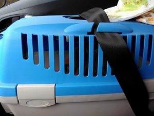 Die Transportbox muss im Auto gesichert werden, beispielsweise mit einem Gurt.   (Bild: zitroneneistee)