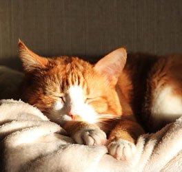Nach der Kastration sollte sich die Katze in Ruhe von der Operation erholen können.   Foto: ShaktiShiva /pixabay