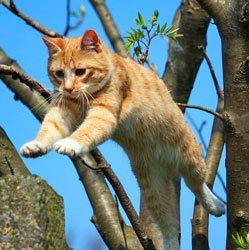 Bevor Katzen und Kater nicht kastriert sind,   sollten sie keinen Freigang haben. Foto: rihaij /pixabay