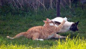 Unkastrierte Katzen und Kater streunen oft weit umher. Viele kommen dabei unter die Räder und sterben im Straßenverkehr. Auch kämpfen vor allem unkastrierte Kater mit anderen Katern um Reviere und die Gunst der Weibchen. Foto: rihaij /pixabay