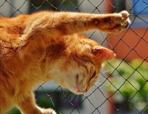 cat-1455463.jpg