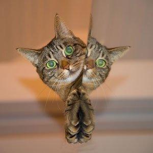 Katzen stellen einige Ansprüche an ihr «stilles Örtchen».   Foto: Schmid‐Reportage /pixabay