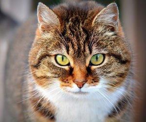 Stimmt die Klohygiene nicht, meiden Katzen ihr Klo.   Foto: Ben_Kerckx /pixabay