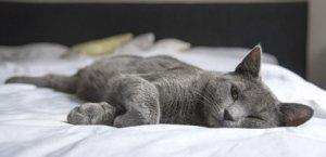 Ist die Katze plötzlich unsauber, muss sie zum Tierarzt, denn sie ist möglicherweise krank.   Foto: milivanily /pixabay