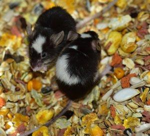 mouse-868555.jpg