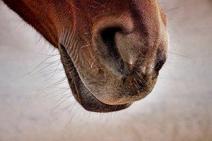 horse-3916028.jpg