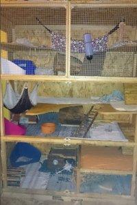 Dieser Selbstbau bietet mit 2 eingebauten Volletagen und weiteren,   Etagen Platz für ein Rudel Ratten. (Bild: TheKit)