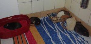 Neutraler Auslauf im Bad mit noch wenig Einrichtung. Einige Tiere bilden Stress‐Kuschelhaufen. (Bild: Nienor)