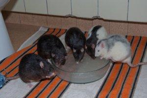 Vertragen sich die Tiere im neutralen Auslauf erst einmal, sollten sie dort auch beschäftigt werden. (Bild: Nienor)