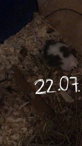 203788