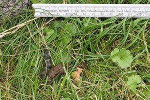 429eb7d0e4a478 Auch tritt es als oder atypisch erlerntes bei koprophilen Menschen auf.  Wenn der Durchmesser 5-8 mm beträgt ist es einer. Sorgen Kotreste