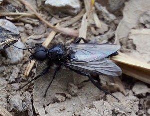 Insekt1.jpg
