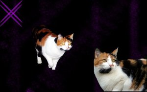 nickyyschatzz 333 .jpg
