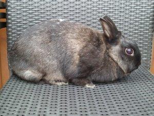 Feline.. =) 2, 5 kg.jpg