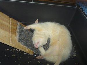 Knut (17).JPG