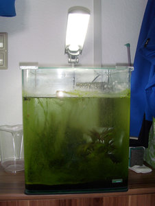 Aquarium_vorher.jpg