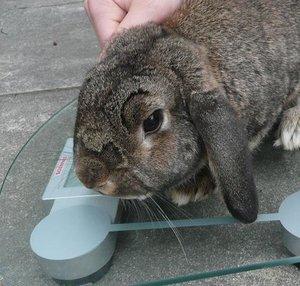 P1090842michel top bunny.jpg