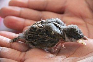 vogel gefunden 014.JPG