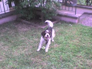 Leila und Ella im Park 038.jpg