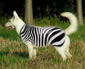 zebrahund.jpg