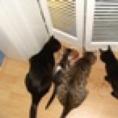 Grauer Kot