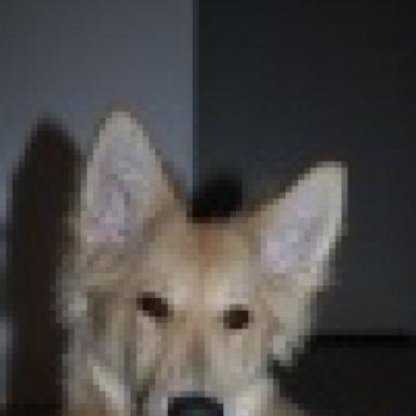 Platinum Puppy Doch Nicht Das Passende Futter Breiiger Kotabsatz Und Mehr
