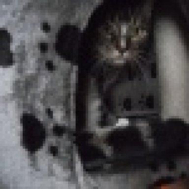 Katzen kratzen nachts entweder Tapete oder Tür!