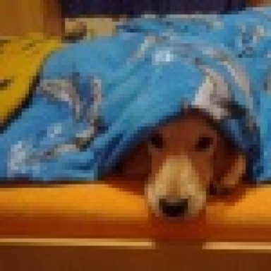 Desensibilisierung hundeallergie