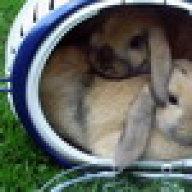 Rammelt kaninchen Weibchen rammelt&makiert