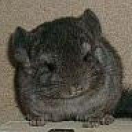 Hellbrauner Kot