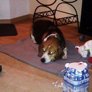 Weihnachten! Sie hat grade Ihre Geschenke ausgepackt und war wohl nicht so glücklich damit :D