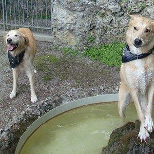 Brunnenwasser macht auch ihre nase frei.