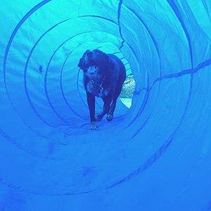 Sie lieeeeebt den Tunnel .. da wir nicht nur durch gerannt .. auch drüber gesprungen :)