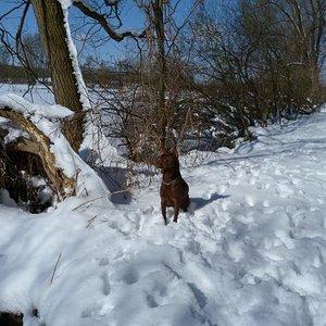 Spiky im schnee