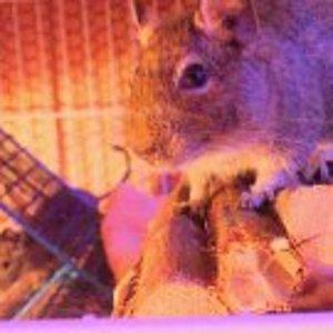 Der Cooki und im Hintergrund der Chacki als er gerade mal 3 Monate alt war :D