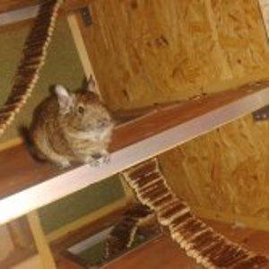 Chacki ist begeistert vom neuen Käfig :)
