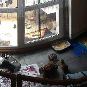 IMAG0488 640x190 Kleines Kaninchengehege (5 m2). Balkon sowie den Rest vom Wohnzimmer können die beiden auch benutzen wenn wir zu Hause sind.