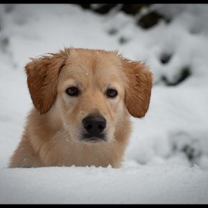 Neo im Schnee.jpg