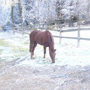 Hier ist er in seinem jetzigen Stall, im Winter 2007/08