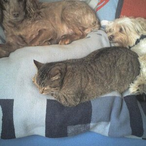 Dayse (Hund meiner Schwester =) Mit meinem Balu un der Katze Tinka =)