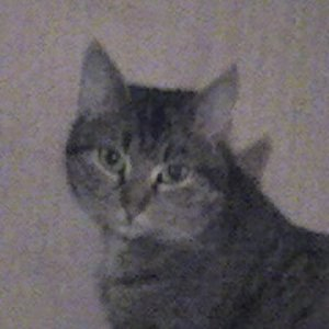tinka meine Katze =)