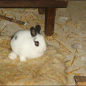 Soo das ist Sissi die Schwester von Stella. Sie hat leider eine kleine Behinderung am Bein aber sie Rennt sehr gerene herum.