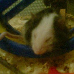 Kleiner Momo ist beim flitzen eingeschlafen...