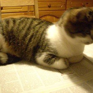 Baby lässt mich meine Zeitung nicht lesen.
